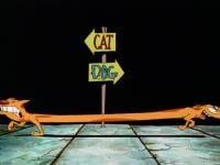 CatDog Season 1 Image